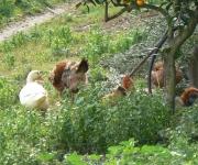 Wildlife & plants